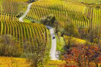 イタリア ランゲ 黄葉の葡萄畑