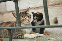 トルコ イスタンブール旧市街の猫