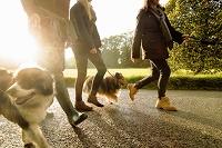犬の散歩をするシニア