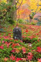 京都府 圓光寺 十牛之庭の散り紅葉と地蔵
