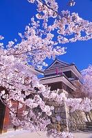 長野県 桜咲く春の上田城