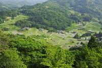 島根県 室谷の棚田