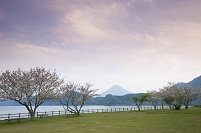 鹿児島県 池田湖畔 開聞岳