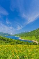 群馬県 ニッコウキスゲ咲く野反湖