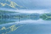 長野県 霧の上高地 大正池
