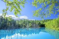 日本 北海道 青い池