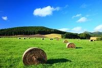 北海道 ロール牧草