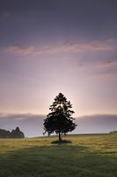 北海道 春よ来いの一本の木の朝