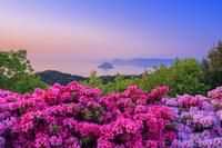 岡山県 ツツジ咲く王子ヶ岳より瀬戸内海 大槌島朝景