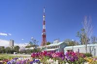 東京都 東京タワーと芝公園