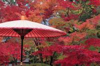 京都府 永観堂 野点傘
