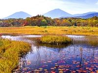青森県 田代平湿原の紅葉