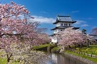 北海道 松前城の桜とお堀