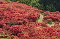 奈良県 御所市 葛城山自然つつじ園