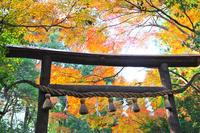 京都府 野宮神社 紅葉