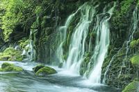 秋田県 鳥海山山麓 苔むす元滝伏流水