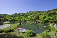 京都 天龍寺 曹源池
