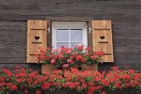 スイス ツェルマットの窓辺の花