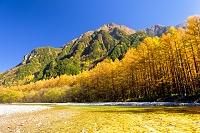 長野県 紅葉の六百山と梓川の流れ