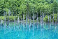 北海道 青い池