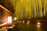 京都府 花灯路 竹林の小径