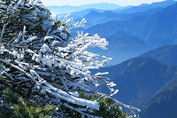 長野県 爺ケ岳の霧氷と山並み