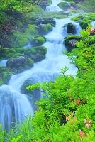 群馬県 中之条町 初夏のチャツボミゴケ公園