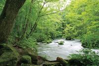 青森県 夏の奥入瀬渓流三乱の流れ