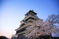 熊本県 熊本城 桜 夕景