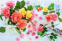 色々なバラの花