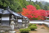 滋賀県 紅葉の清瀧寺徳源院