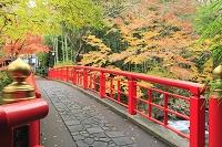 静岡県 修善寺温泉 桂橋と楓の紅葉