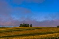 北海道 夕日で焼ける麦畑
