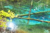 北海道 神の子池と木漏れ日