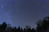 北海道 北極星の星空と森