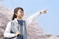 桜と指差しする女子中学生