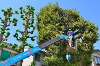 東京都 庭木の剪定