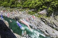 徳島県 大歩危峡とコイノボリ