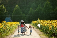 ヒマワリと日本人家族