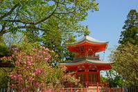 正法寺 春の遍照塔