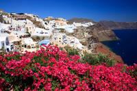 ギリシャ  ブーゲンビリアとイアの白い家並