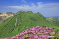 大分県 ミヤマキリシマ咲く平治岳からの三俣山