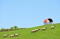北海道 士別市 羊