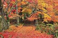 京都府 龍穏寺 雨上がりの参道の散り紅葉
