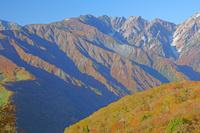 長野県 朝の岩岳から八方尾根左と唐松岳中央の山
