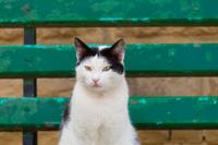 マルタ共和国の白黒猫