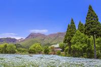 くじゅう花公園の花壇と九重連山