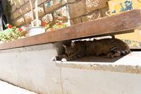 ベンチの隙間で休むキジトラ
