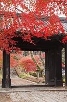 福岡県 秋月城跡