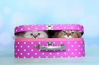 スーツケースに入った猫